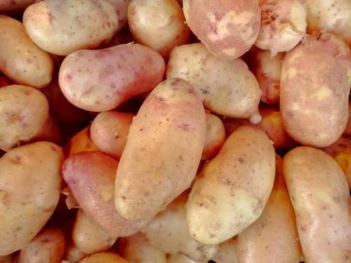 Купить Картофель розовый фермерский