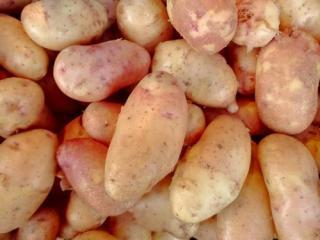 Купить Картофель розовый молодой