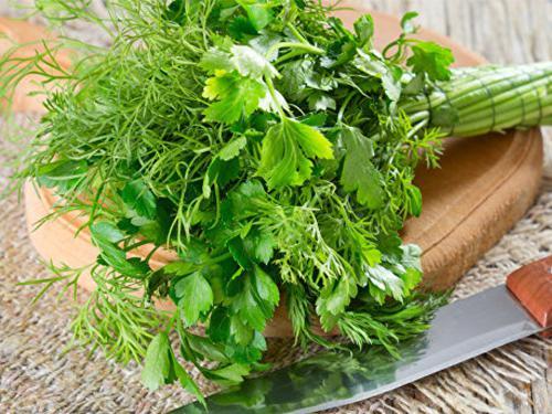 Купить Букет зелени из укропа и петрушки