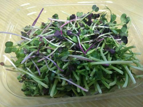 Купить Микс салатный (microgreen)