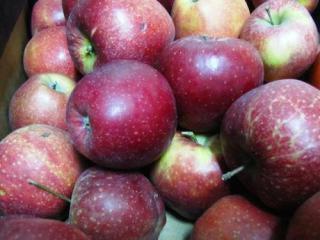 """Купить Яблоки сорт """"Черный принц""""(бельгийский сорт)"""