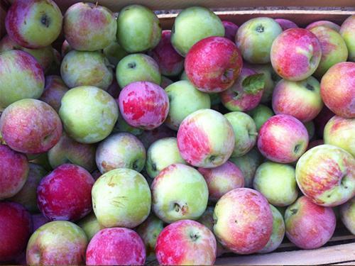 """Купить Яблоки, сорт """"Слава Победителям"""""""