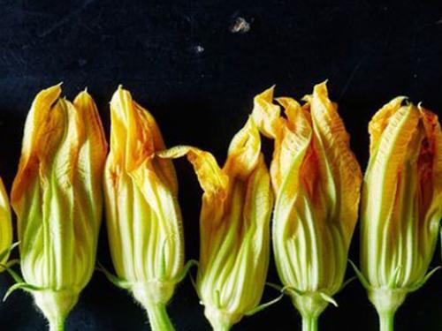 Купить Цветы кабачков