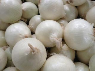 Купить Лук репчатый белый салатный