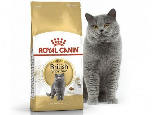 Купить ROYAL CANIN British Shorthair - Полнорационный сухой корм для взрослых кошек породы британская короткошерстная в возрасте старше 12 месяцев 4 кг