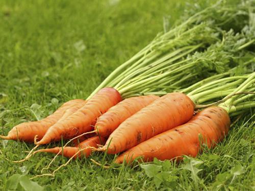 Купить Морковь