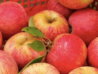 """Купить Яблоки, сорт """"Гала"""" органические"""