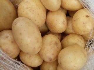 Купить Картофель белый молодой