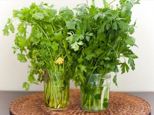 Купить Букет зелени из укропа, петрушки и кинзы