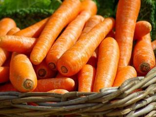 Купить Морковь ОПТ