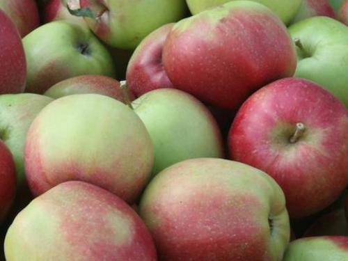 """Купить Яблоки, сорт """"Лигольд"""""""