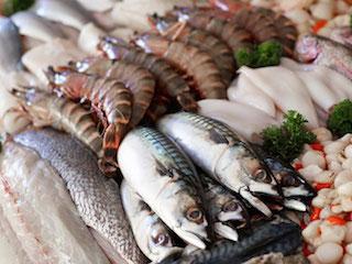 Купить Рыба
