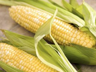 Купить Кукуруза в початках