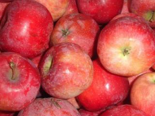 Купить Яблоки сорта Флорина